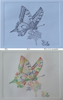 annelies_van_twist_vlinder_ets